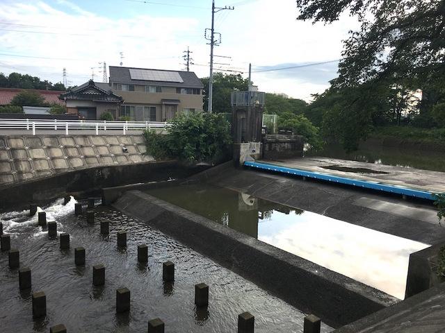 五条川4.jpg